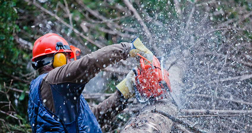 Pro Green Trees Removing and Cutting Limbs